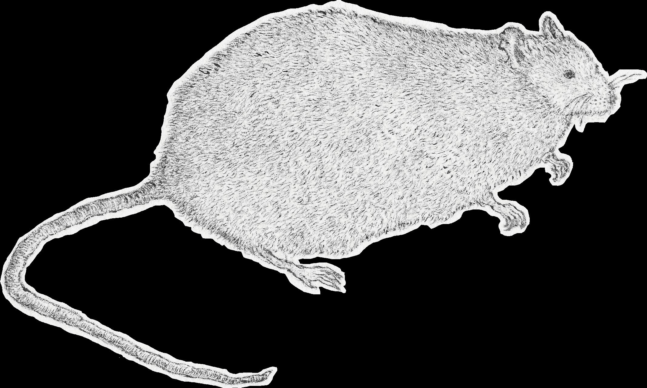 ねずみ(Rat)